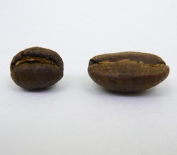 What is a peaberry and South/Central American vs African coffee